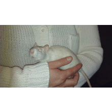 Rat Tails Rescue and Rehoming