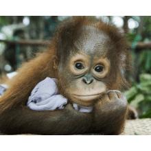 Camps International Borneo 2016 - Max Beaumont