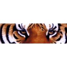 Torbay Tigers Senior Basketball Club