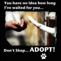 Paws to Help UK