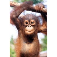 Borneo 2016 - Connie Ireland
