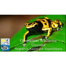 Operation Wallacea Guyana 2016 - Vicki Balfour