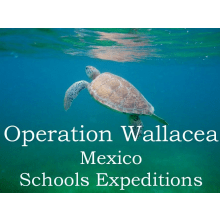 Operation Wallacea Mexico 2016 - Oliver Griffin