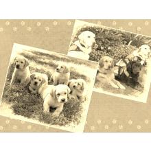 Autism Support Dog - Alyssa Stirling