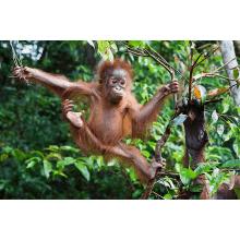 Outlook Expeditions Borneo 2016 - Cassia Lemon