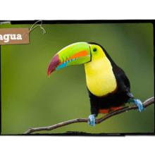 World Challenge Costa Rica 2017- Joe Gregory