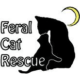Feral Cat Rescue - Plymouth