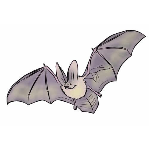 Mid Devon Bat Rescue