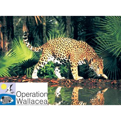 Operation Wallacea Guyana 2016 - Emily Wilson