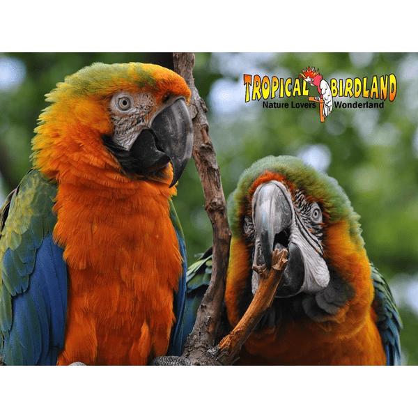 Tropical Birdland Leicester