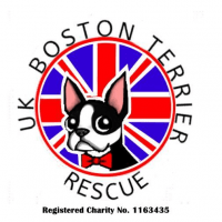 UK Boston Terrier Rescue