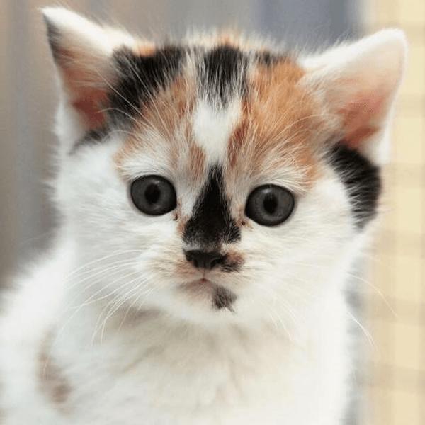 Cat Rescue & Welfare Trust