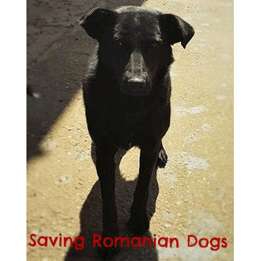 Saving Romanian Dogs Targoviste