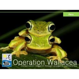 Operation Wallacea Peru 2017 - Katey Fisher