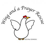 Wing and a Prayer Hen Rescue SCIO