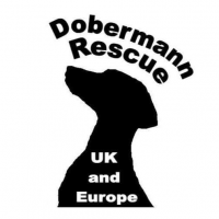 Dobermann Rescue U.K & Europe