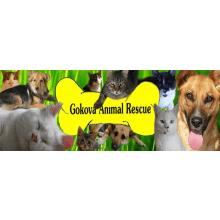 Gokova Animal Rescue