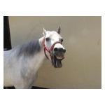 Last Angel Equine Rescue