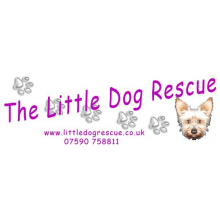 The Little Dog Rescue