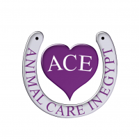ACE - Animal Care in Egypt