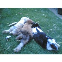 Odies Warren For Rabbits
