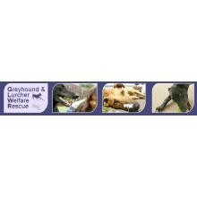Greyhound And Lurcher Welfare And Rescue - Chippenham