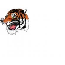 Theale Tigers U15