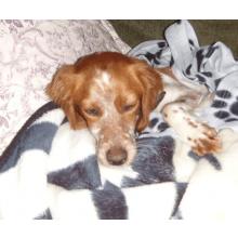 Animal Rescue Kos