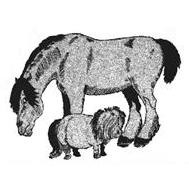 Isleham Horse And Pony Rescue Centre