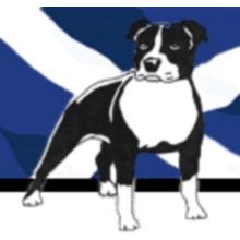 Scottish Staffordshire Bull Terrier Rescue
