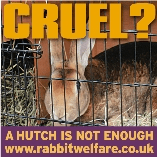 Rabbit Welfare Association And Fund