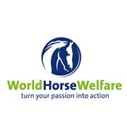 World Horse Welfare Challenge Ride - Anna Newman