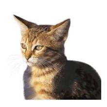 Feline Network