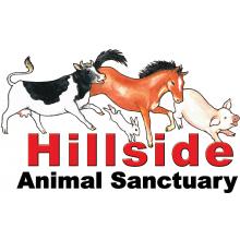 Hillside Animal Sanctuary - Norwich