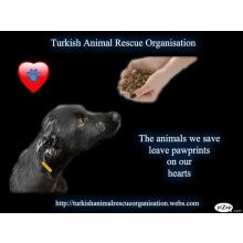 Turkish Animal Rescue Organisation
