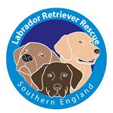 Labrador Retriever Rescue Southern England