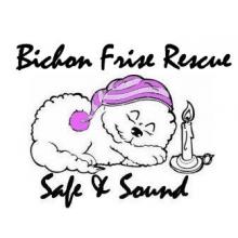 Bichon Frise Rescue UK