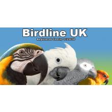 Birdline UK Parrot Rescue
