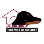 Dobermann Rehoming Association - Chobham