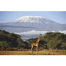 Childreach International Kilimanjaro 2012 - Tara Hall