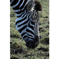 Fife Animal Trust