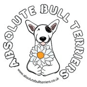 Absolute Bull Terrier Rescue