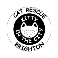 Kitty in the City Cat Rescue