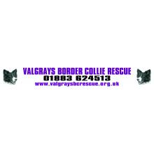 Valgrays Border Collie And Animal Rescue