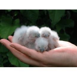 North Wales Bird Trust