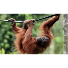 Outlook Expeditions to Borneo Borneo Expedition 2013 - Jenny Jones