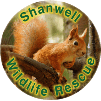 Shanwell Wildlife Rescue Trust