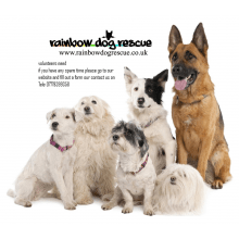Rainbow Dog Rescue