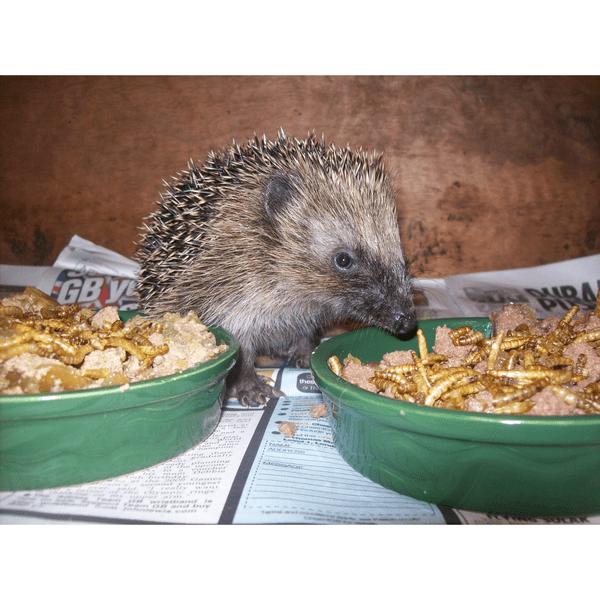 Five Valleys Hedgehog & Bird Rescue