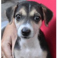 Friends of Goa Animal Welfare Trust